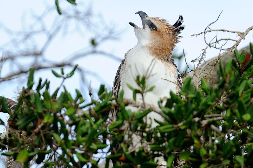Gallery  Kulu Safaris Sri Lanka  kulusafaris.com
