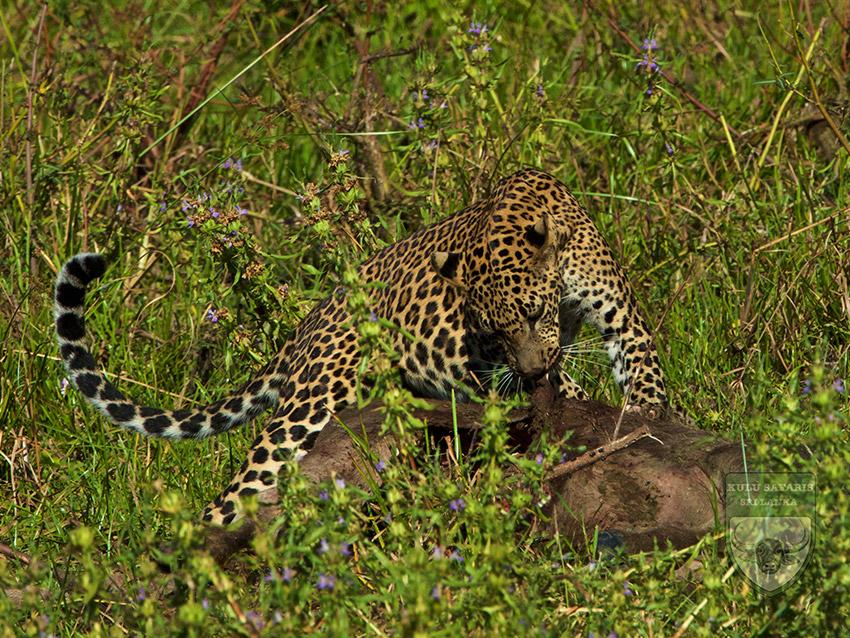 Yala National Park Sri Lanka  Sri Lanka Map  Kulu Safaris Sri